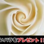 父の日,白いバラ